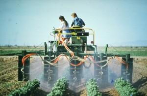 Spraying - HiBoy cotton