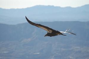 Photo Credit:  USFWS Pacific Southwest