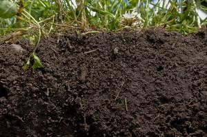 Photo credit: NRCS Soil Health