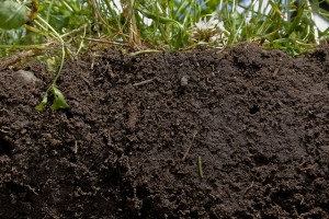 Photo credit: Natural Resources Conservation Service Soil Health Campaign