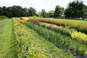 Photo credit: Montgomery County Planning Commission